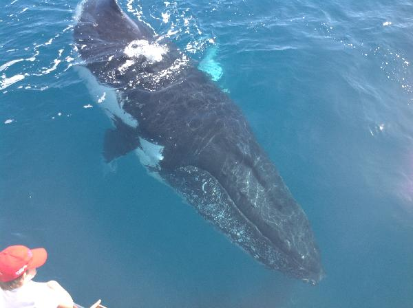 My whale watch