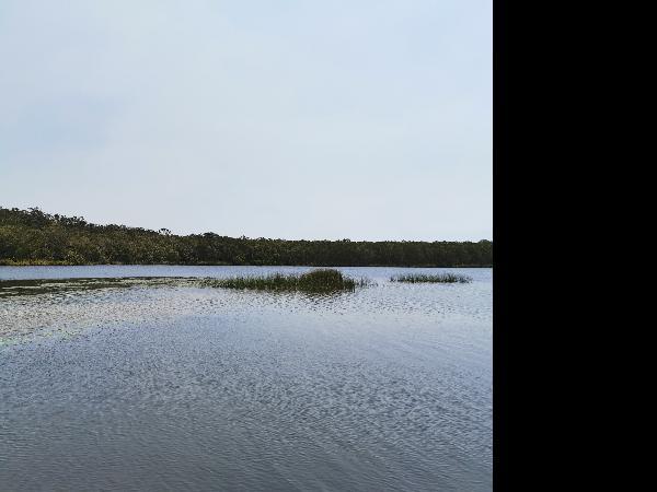 Everglades day