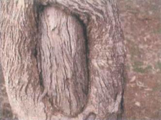 Artefact on Bogan River
