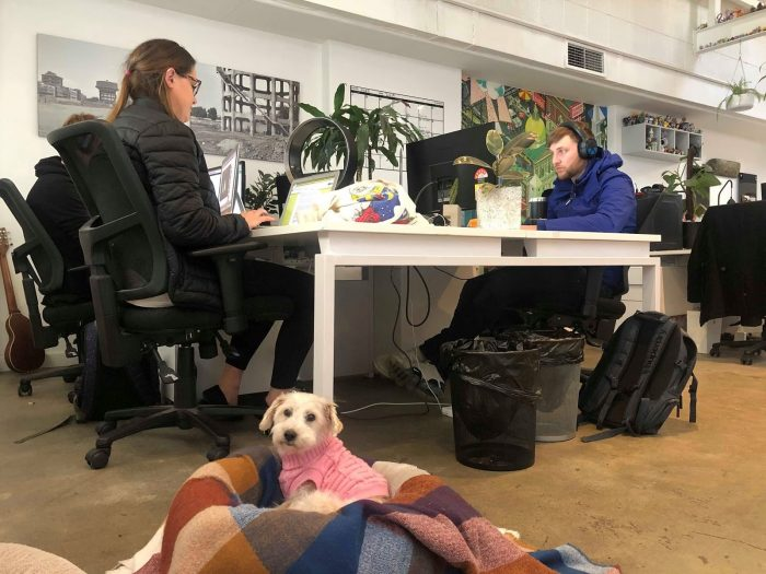 dog-in-workplace