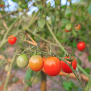 Gardening2_500x500