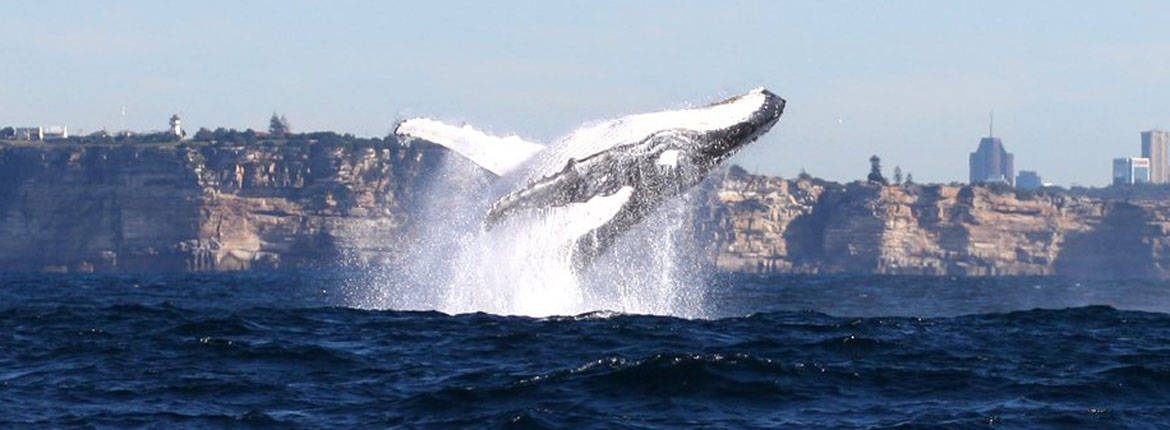Taronga Zoo & Whale Watching Cruise banner