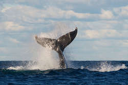 Three things to expect on your first whale watching adventure thumbnail