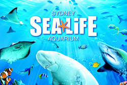 Sea Life Sydney Aquarium Ferry thumbnail