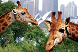 2 Day Pass and Taronga Zoo thumbnail