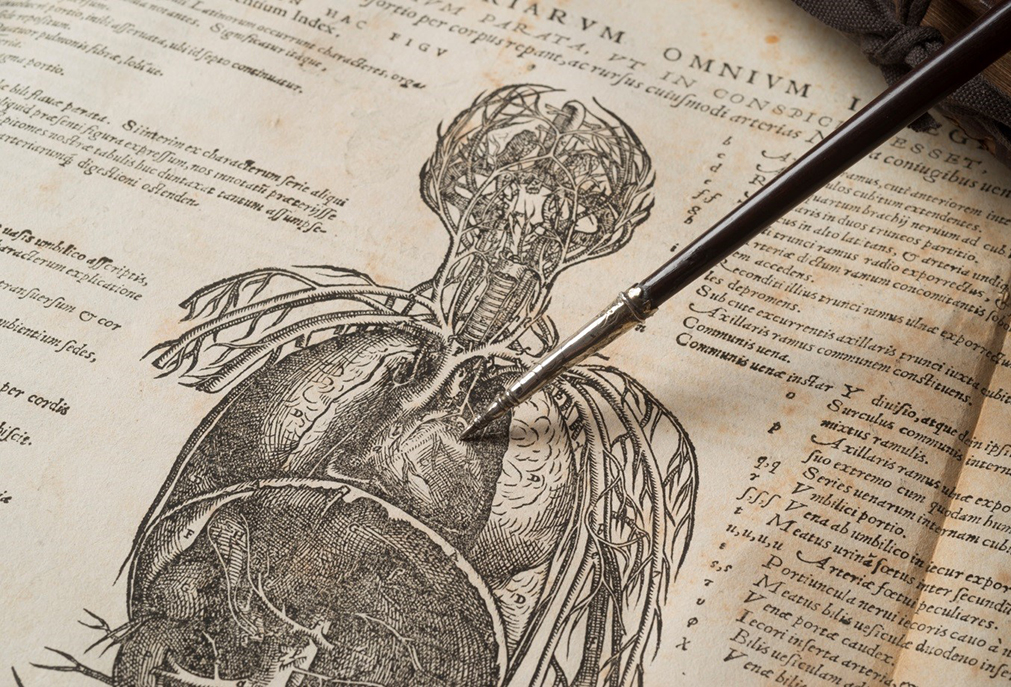 Dr William Harvey and the Heart: Royal College of Physicians | The ...