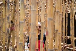 Bamboo Maze 8
