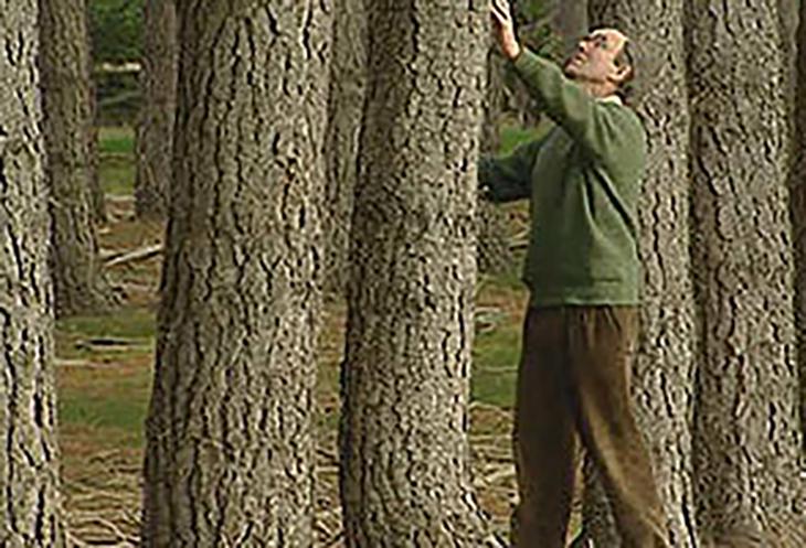 Trees Lanark