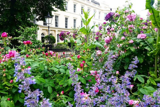 Royal College of Physicians – Summer in the Medicinal Garden