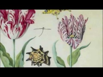 Tiptoe Through The Tulips – Speculating on a Fragile Flower