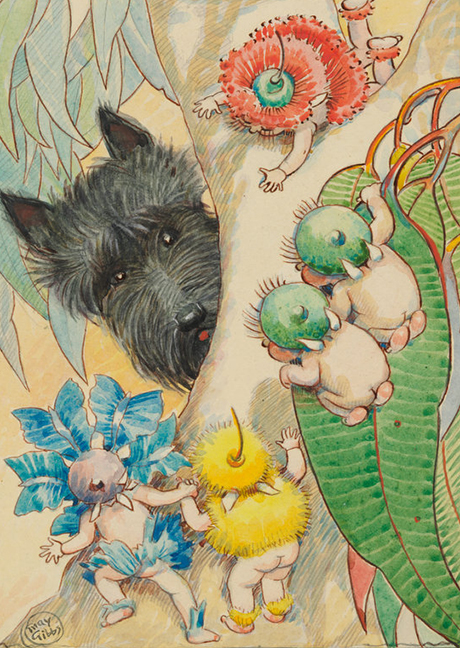 Scottish Terrier in Gumnut land, drawn by May Gibbs, © The Northcott Society and Cerebral Palsy Alliance 2016