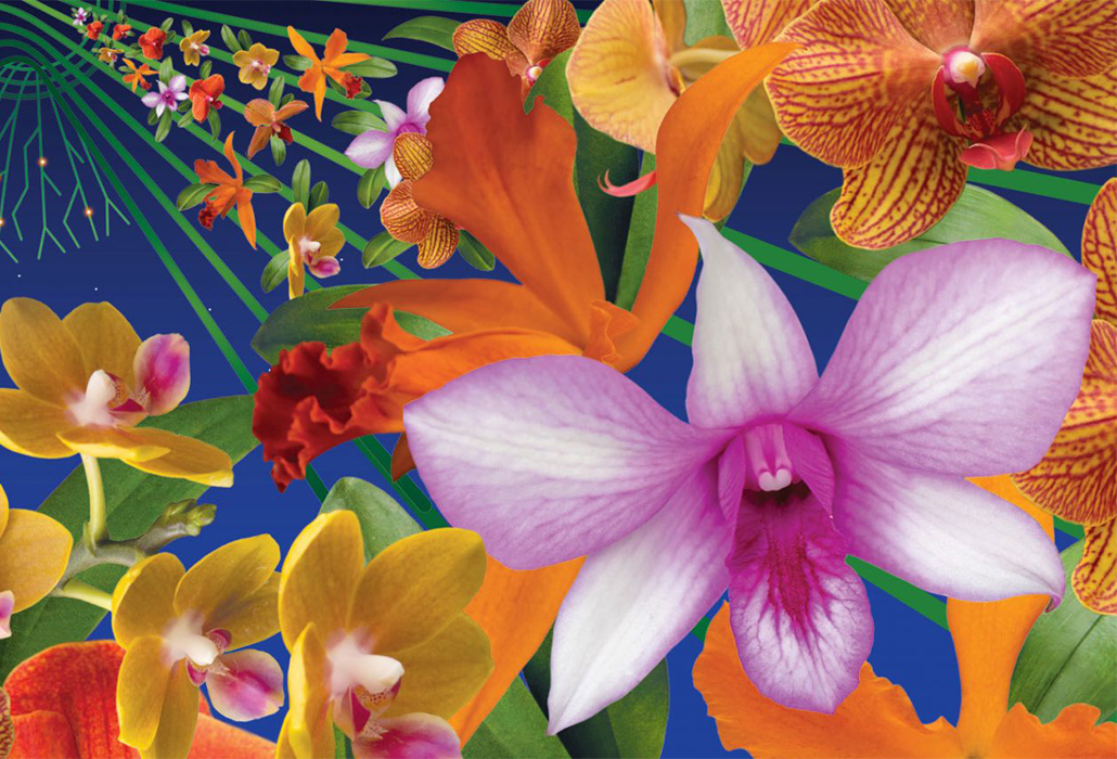Orchid Show Poster