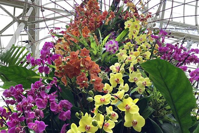 New York Botanical Garden – The Orchid Show: Singapore!