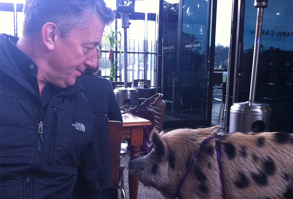 Martyn with a pig in the park at Redfern as we breakfasted with locals, who enjoyed the encounter