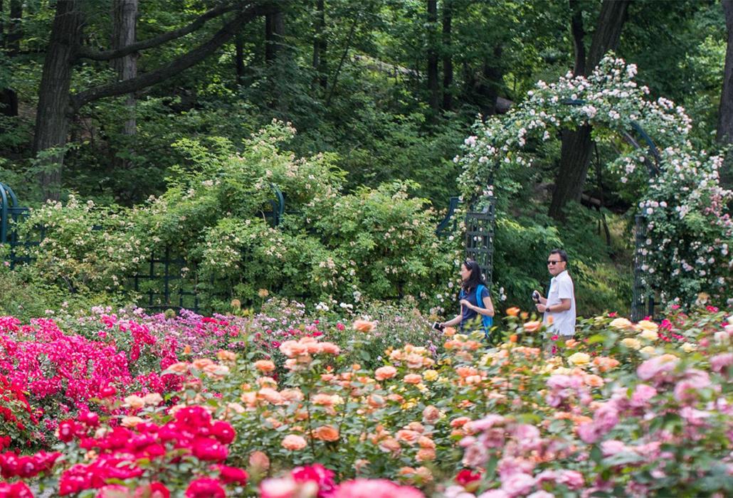 NYBG Rose Garden detail