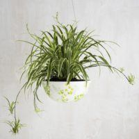 Decorative Hanging Planters