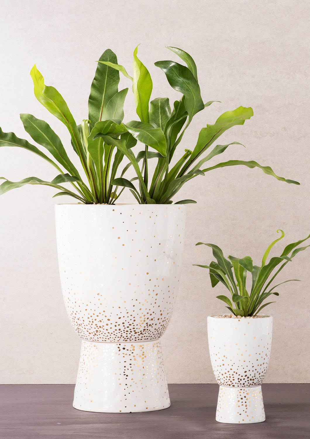 Angus & Celeste Plant Stand Pot Gold Speckle Large and Small