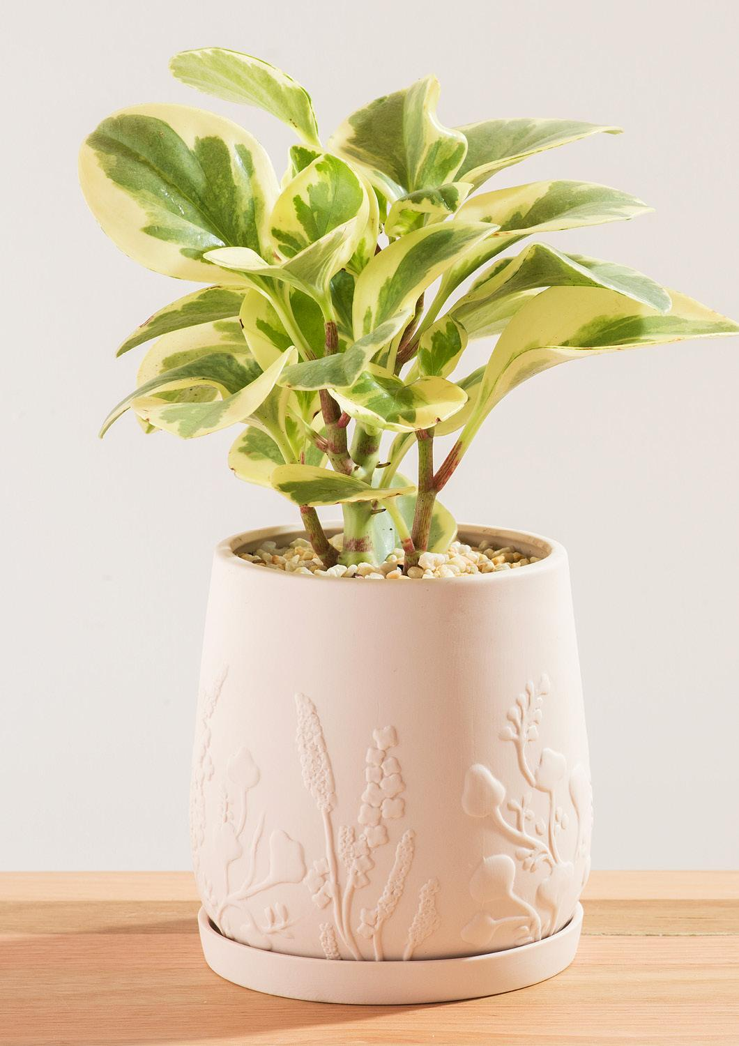 Angus & Celeste Relief Plant Pot Blush
