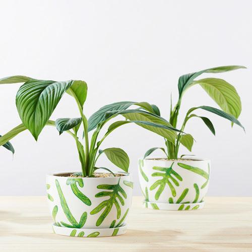 Angus & Celeste Decorative Plant Pots