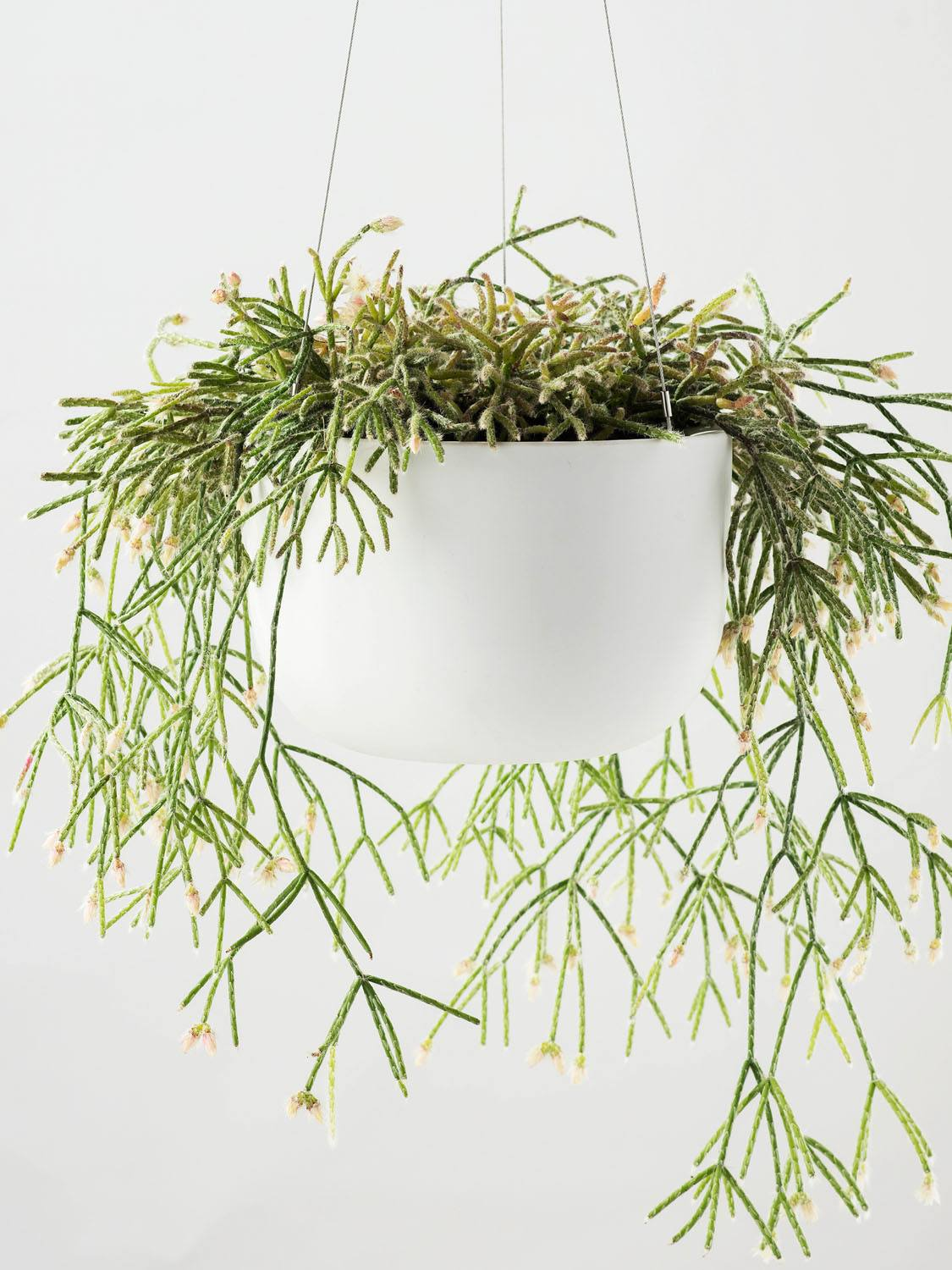 Angus & Celeste Raw Earth Hanging Planter White