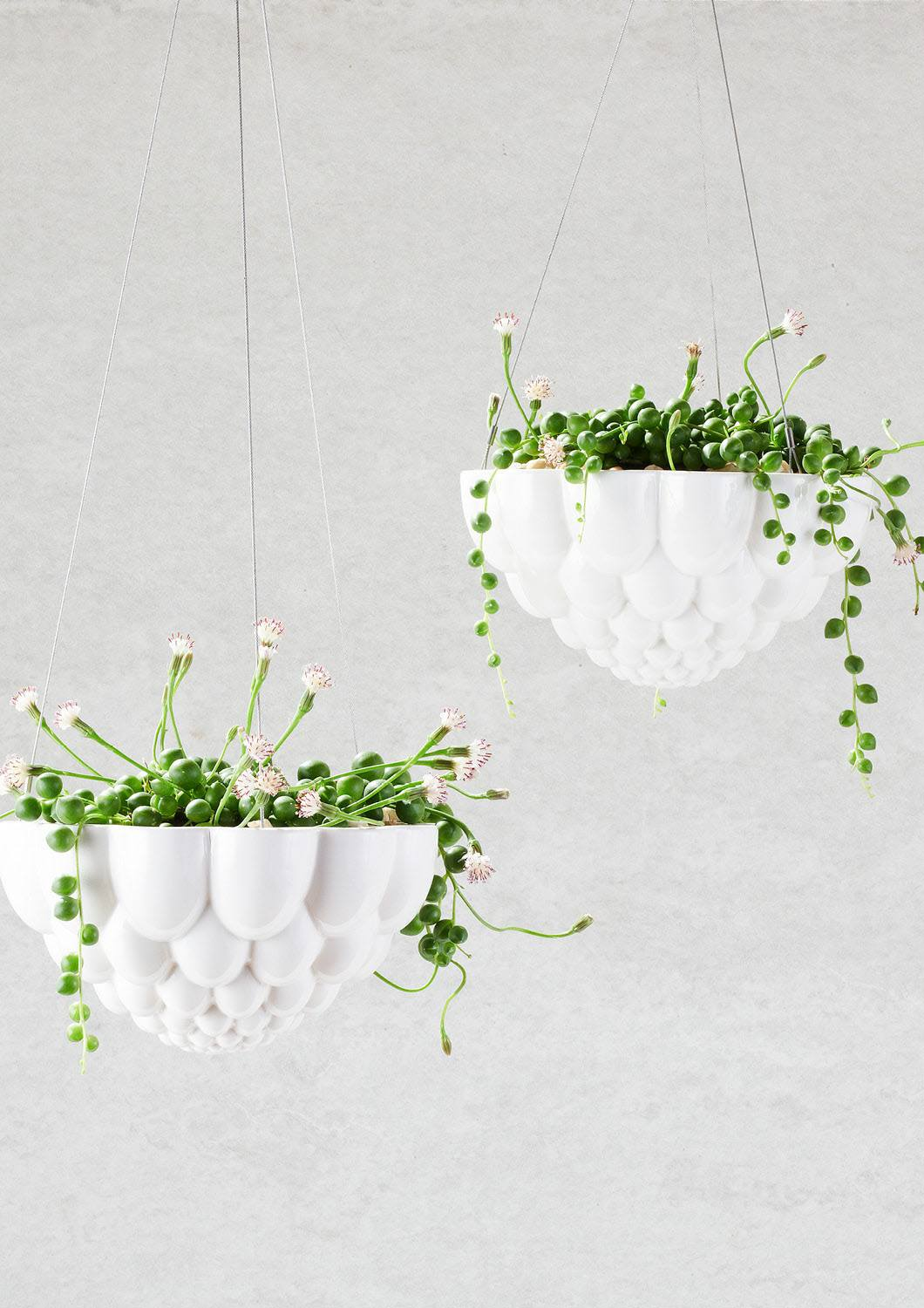 Angus & Celeste Round Jelly Hanging Planter White