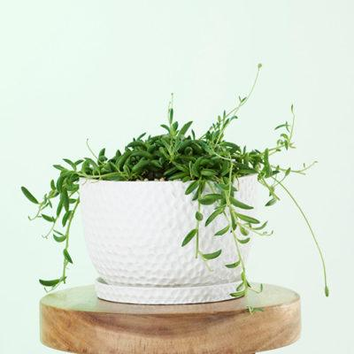 Embossed Hanging Planters & Plant Pots