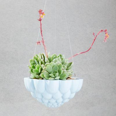 Jelly Hanging Planters