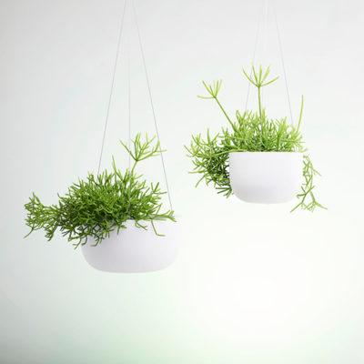Raw Earth Hanging Planters
