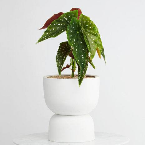 Modern Decorative Hanging Planters, Plant Pots, Tableware