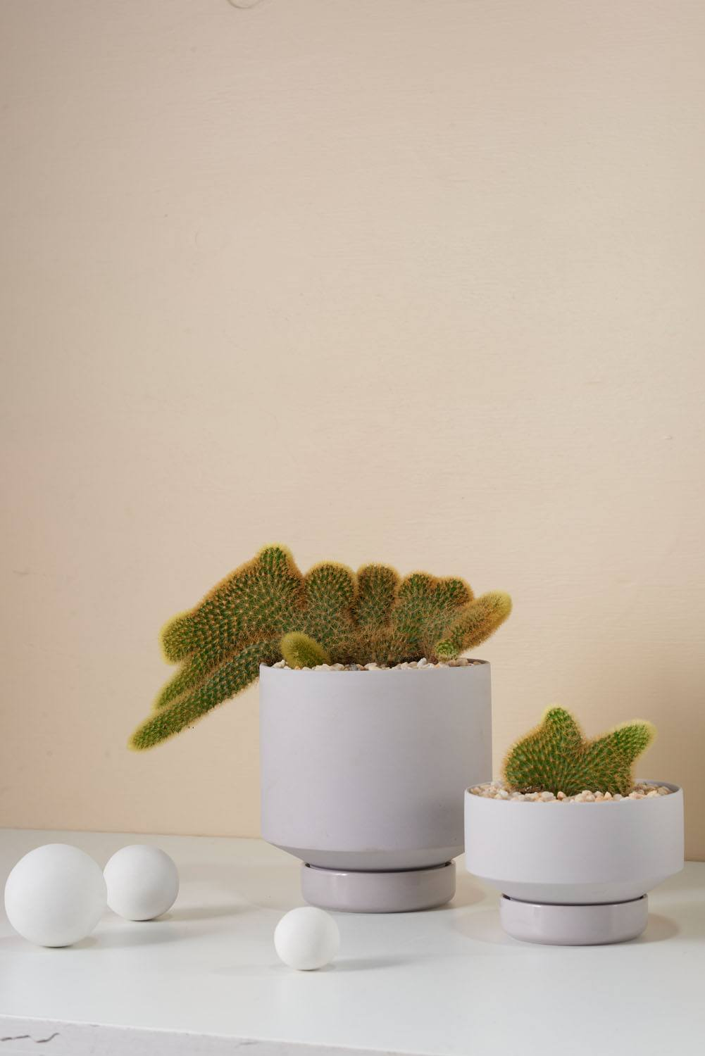 Angus & Celeste Collectors Gro Pots Light Grey Styled