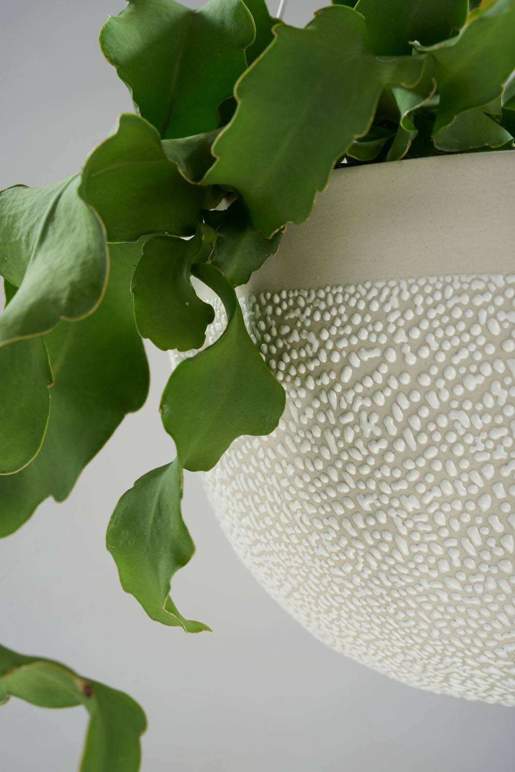 Angus & Celeste White Water Bead Hanging Planters Detail Styled