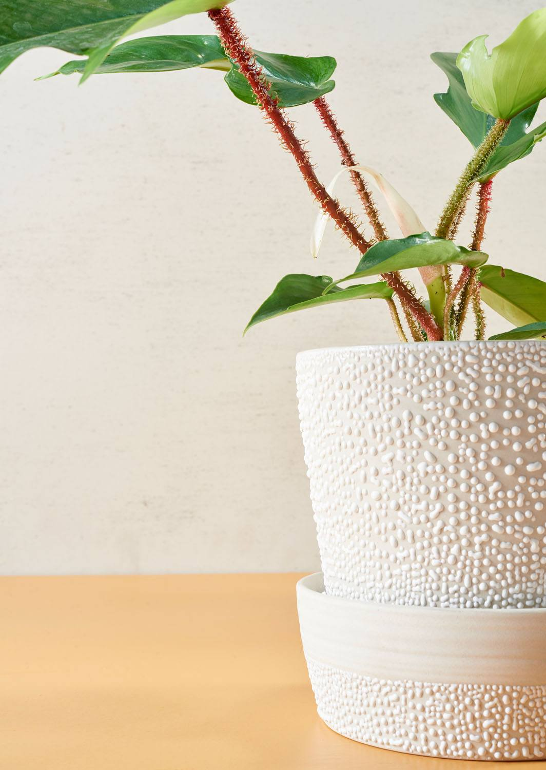 Angus & Celeste White Water Bead Planter Pots Styled Detail