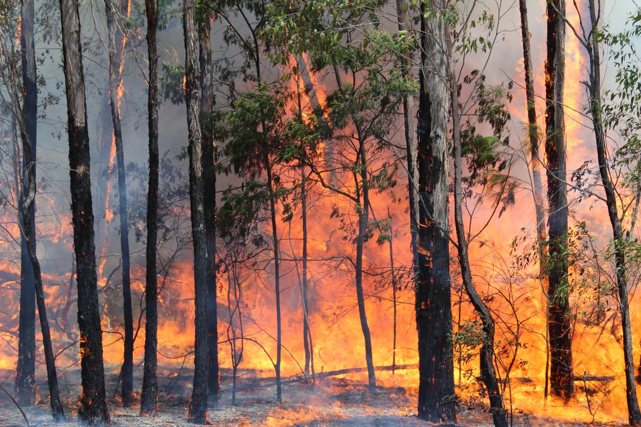 Bushfire in Sydney area, NSW Australia,