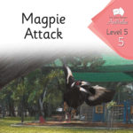 Magpie Attack | Phonics Books Australia | Decodable Readers Australia