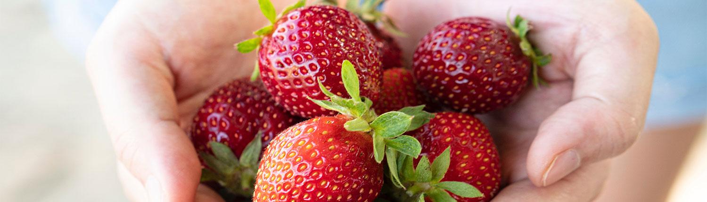 Kaipaki Berries