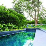 Screening plants: creating your outdoor sanctuary - a total concept pool project with screening plants