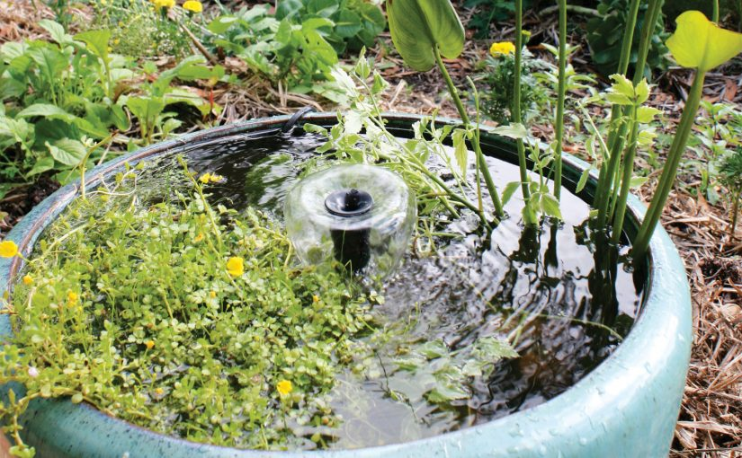 Creating a pretty pond for your garden