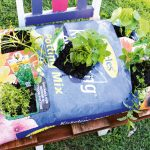 The 15 minute garden-in-a-bag: DIY Project