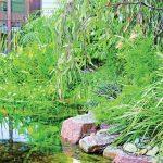 Natural Attraction: a city billabong project
