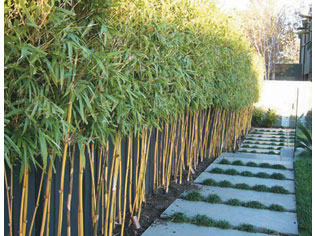 Red Cloud Bamboo Project Ods