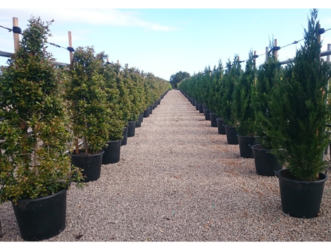 Contract growing product ods for Soft landscape materials