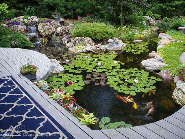 Aquascape Ecosystem Pond Kits - Project | ODS