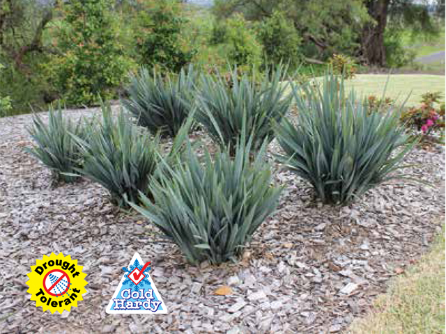 Clarity blue product ods for Soft landscape materials
