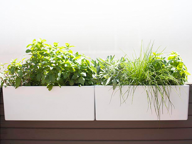 Glowpear Mini Wall Self Watering Planter Product Ods