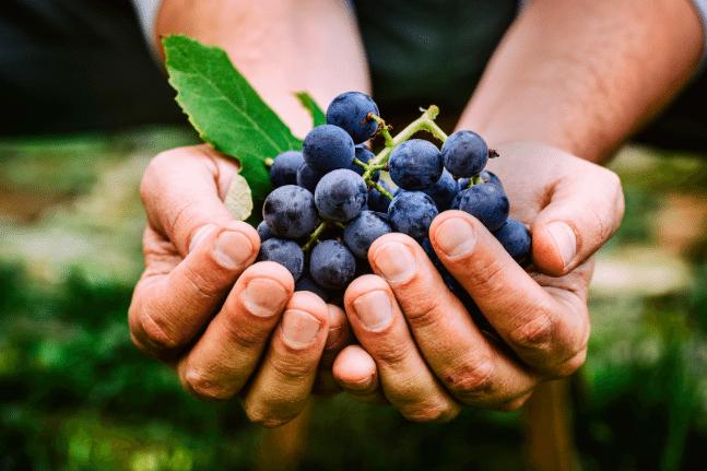 Grapes hand