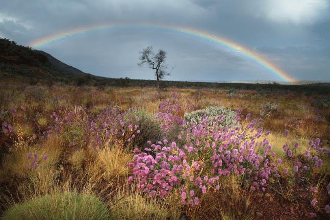 Rainbow over the desert