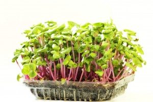 microgreens grwoing in a plastic container