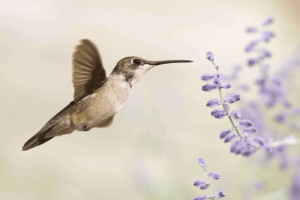 hummingbird flower nature bird happy free meaning life love