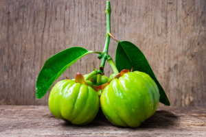 garcinia atroviridis fresh fruit weight loss