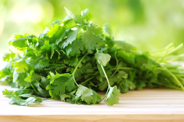 31582849 – bunch of coriander on table